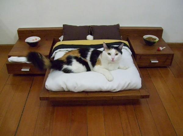 spoiled cat 5