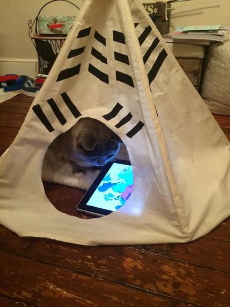 spoiled cat 6