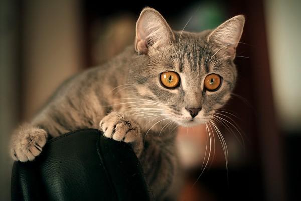 cat fact 1