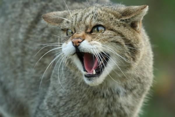 cat fact 4