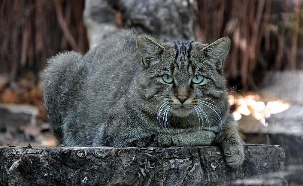cat fact 5