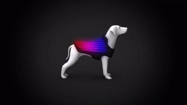 disco dog lost mode