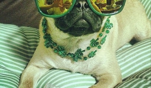 st patricks day dog 1