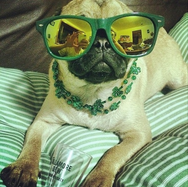 st patricks day dog 1