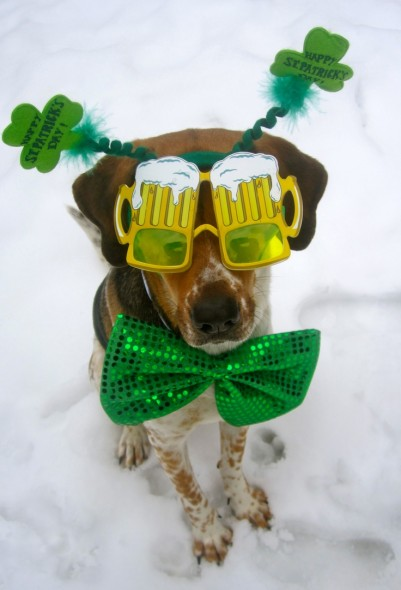 st patricks day dog 2