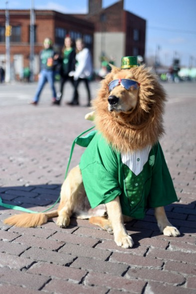 st patricks day dog 3
