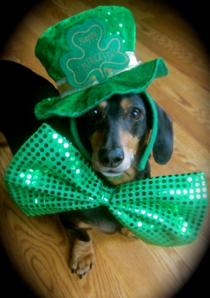 st patricks day dog 7