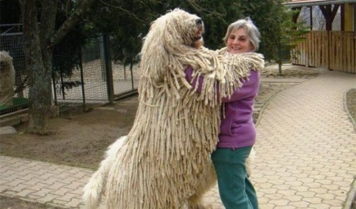 giant dogs 4