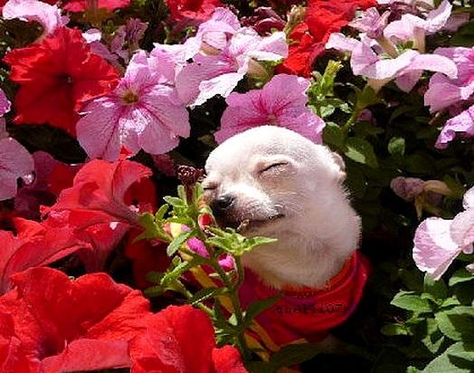 spring dog 10