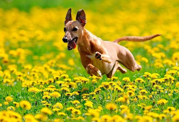 spring dog 4
