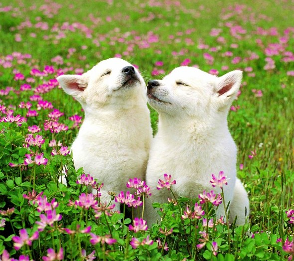 spring dog 5