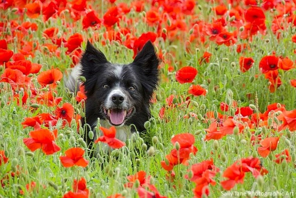 spring dog 6