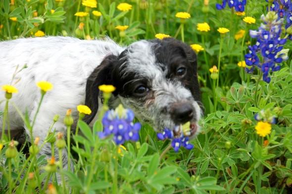 spring dog 7