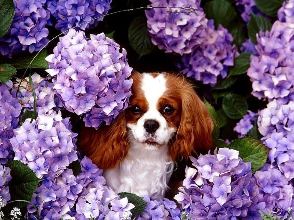spring dog 8