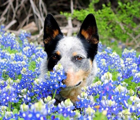 spring dog 9