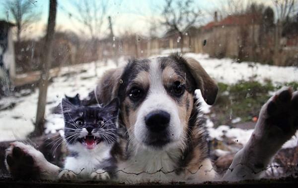let me in pet 2