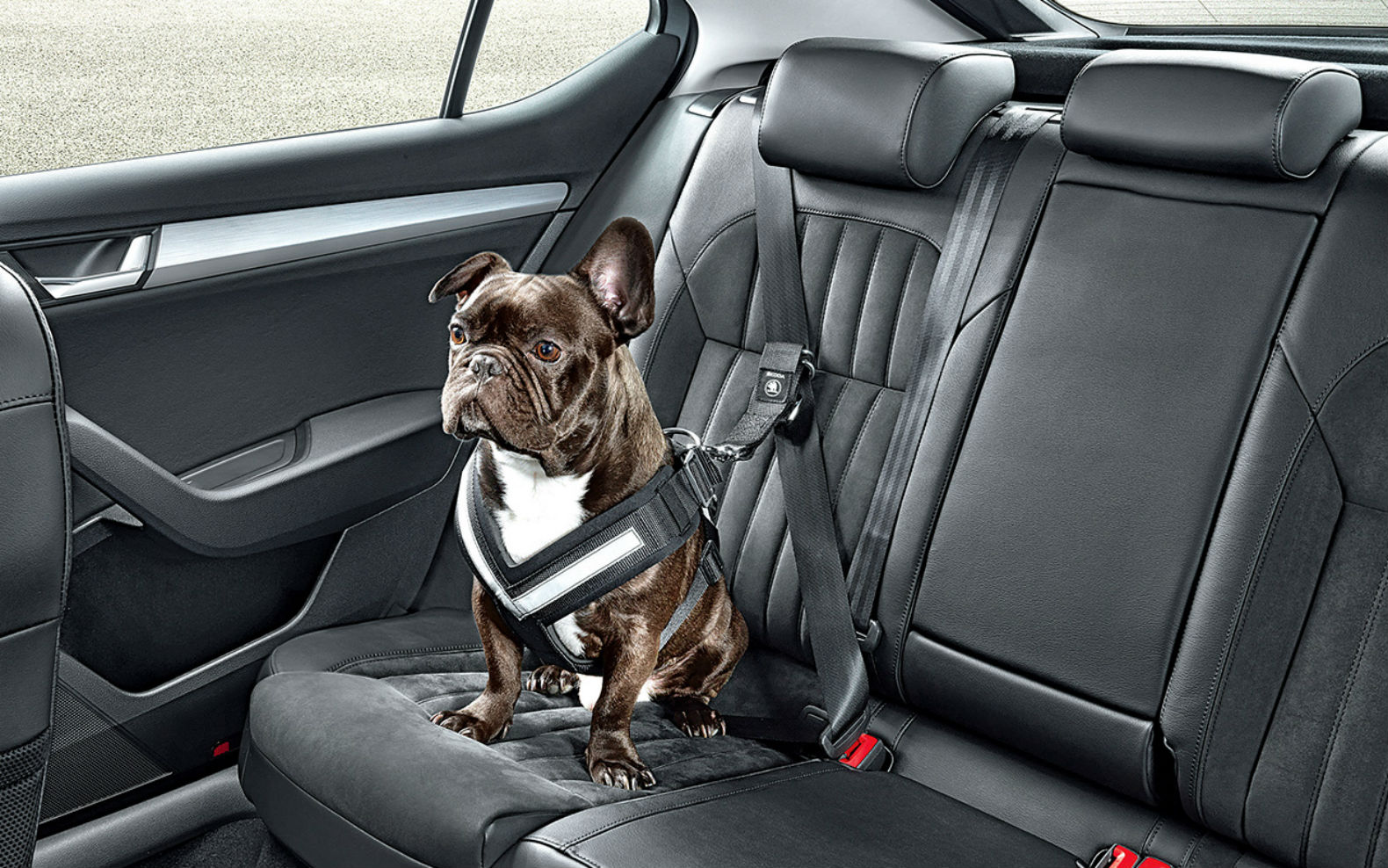 Ensure Your Dog's Safety While Travelling In A Car With This Special ...
