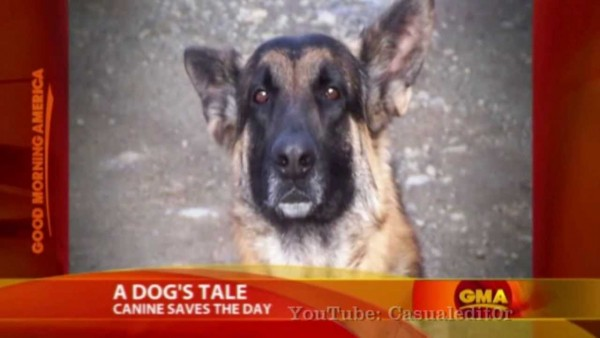 dog saves burning home 1
