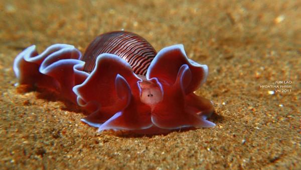 sea slugs 10