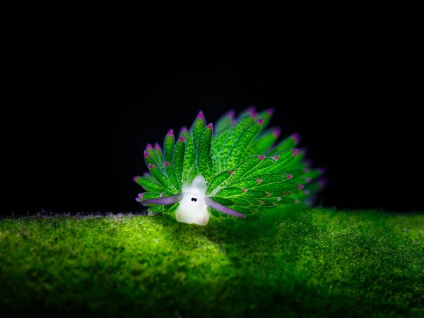 sea slugs 3