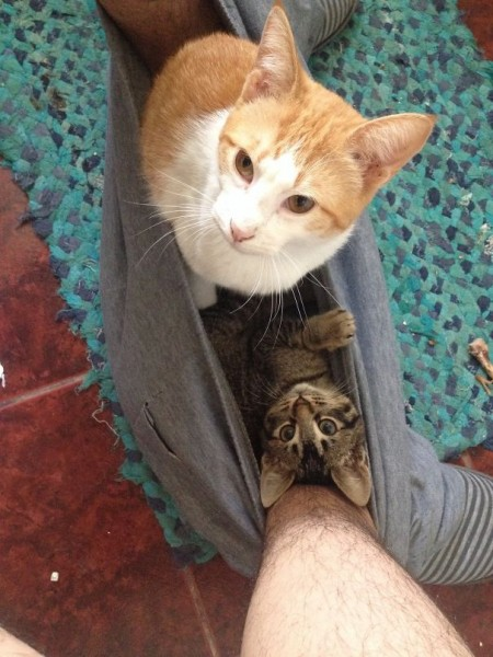 cats personal space 8