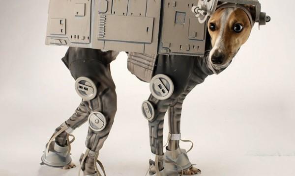 diy pet costumes 6