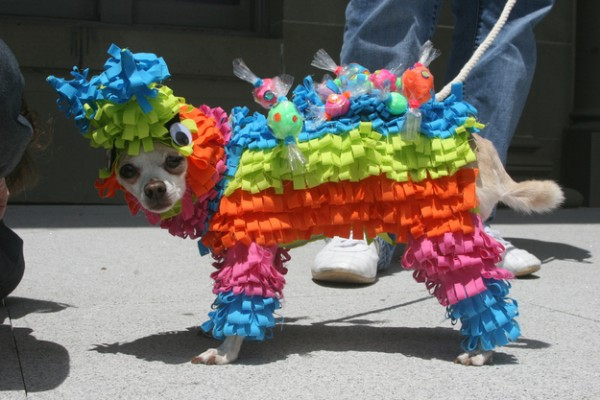 http://www.flickr.com/photos/21279442@N00/4708463756/ ---VIA--- http://www.buzzfeed.com/summeranne/heres-a-picture-of-a-dog-dressed-up-as-a-pin
