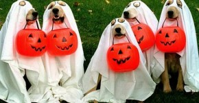 diy pet costumes 8