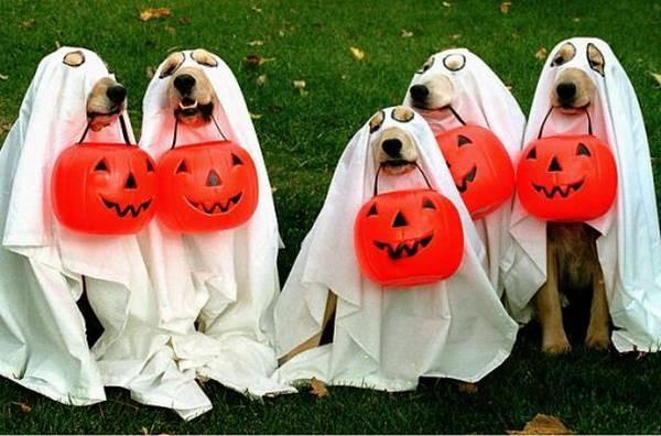 diy pet costumes 8