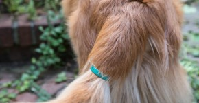 Be Aware Of Your Dog's Emotions With This Sensor Gadget Called TailTalk