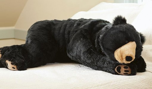 bear sleeping bag 2