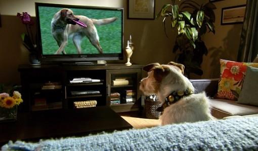 dog commercials 2