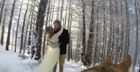 dog filmed wedding 3