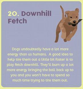 dog hack 20