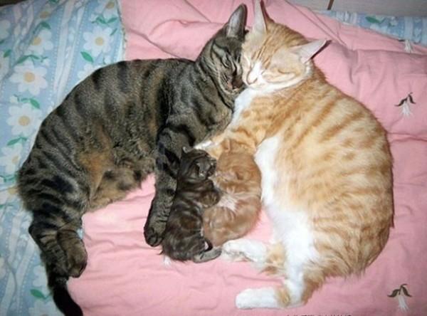 proud cat parents 1