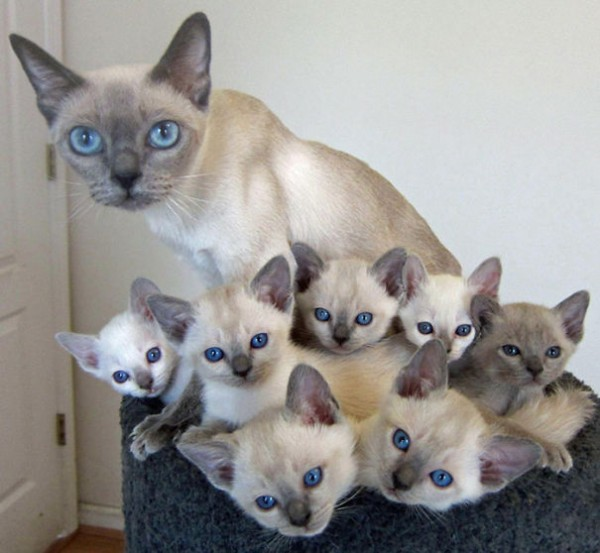 proud cat parents 10