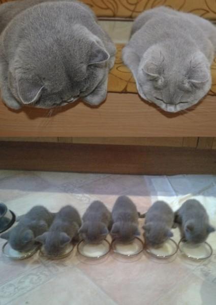 proud cat parents 3
