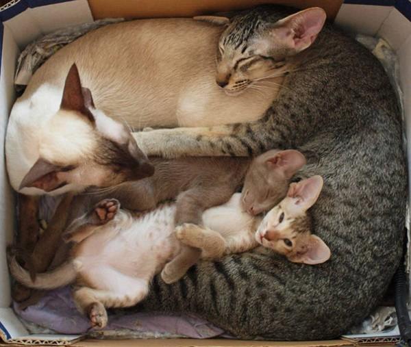 proud cat parents 5