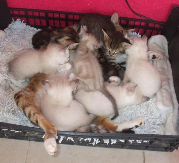 proud cat parents 7