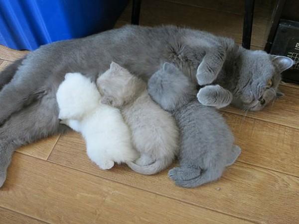 proud cat parents 8