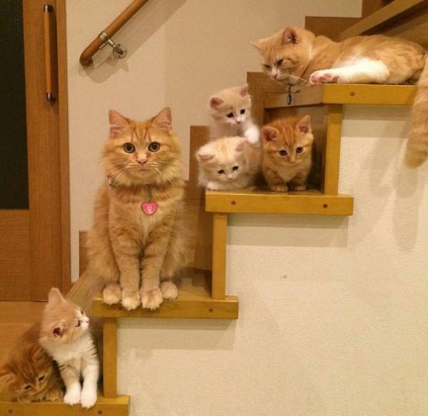 proud cat parents 9