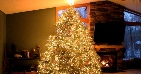 wawra christmas tree 2