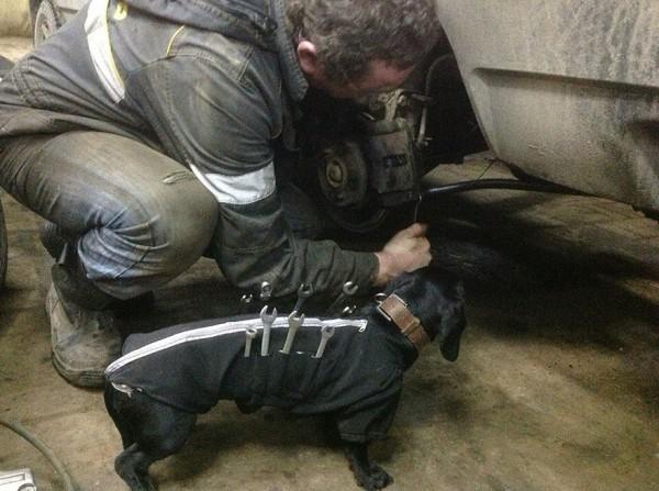 repair shop dachshund 1