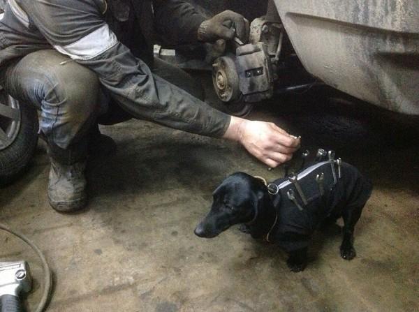 repair shop dachshund 2