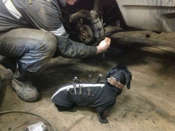 repair shop dachshund 3