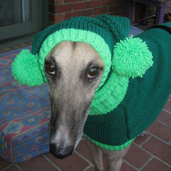 sweatersfor greyhounds 2