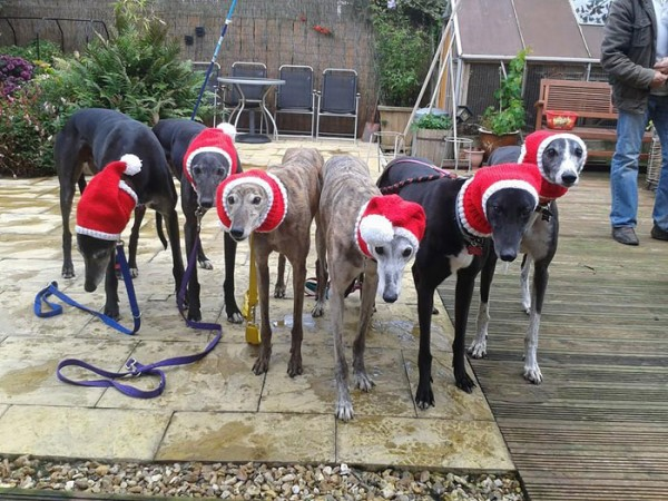 sweatersfor greyhounds 3