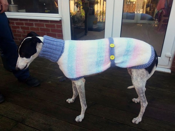 sweatersfor greyhounds 5