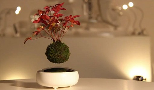 floating bonsai tree 1
