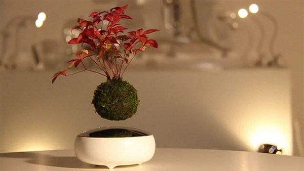 floating bonsai tree 1